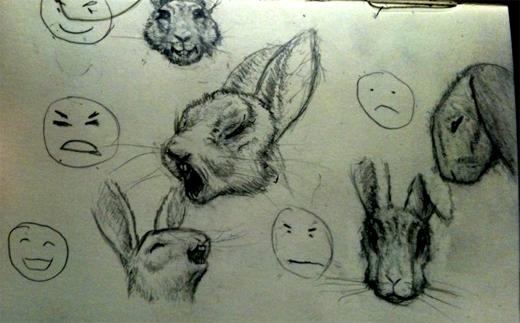 Rabbit expressions