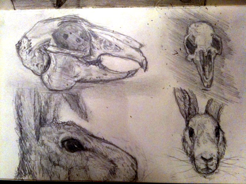 Rabbit facial expressions - Wolfire Games Blog