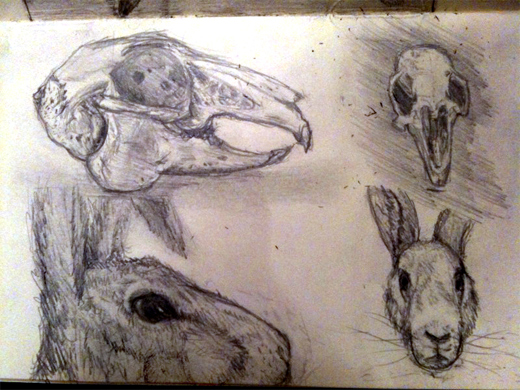 Rabbit heads
