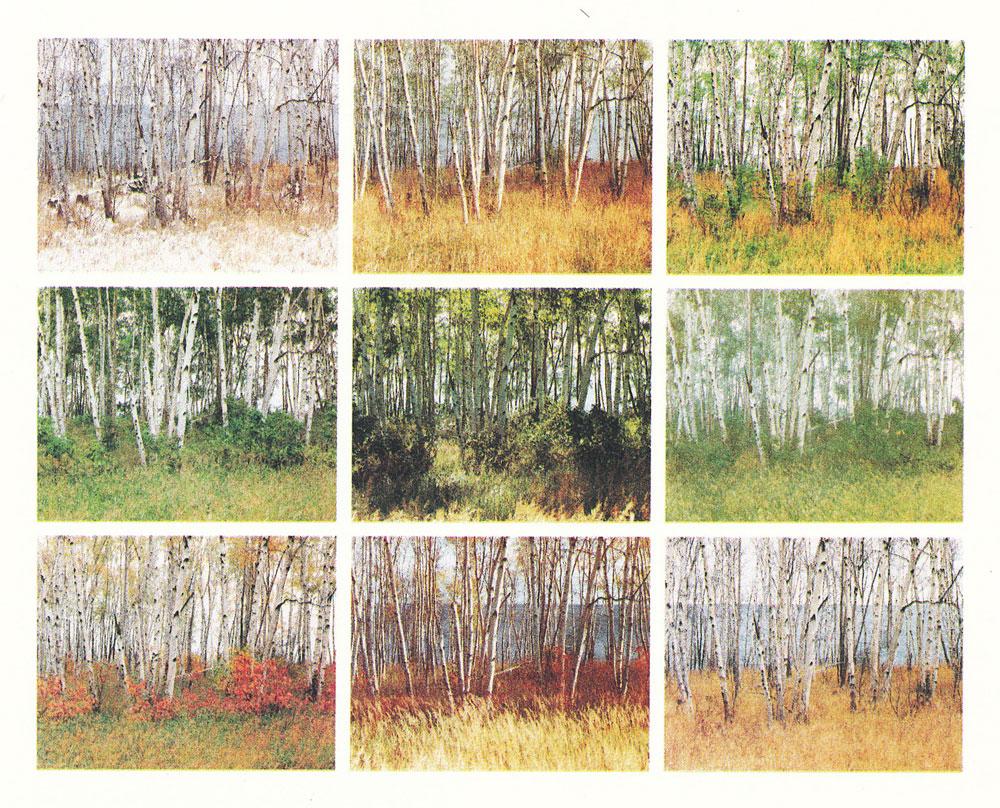 Nature Color Palette Tree